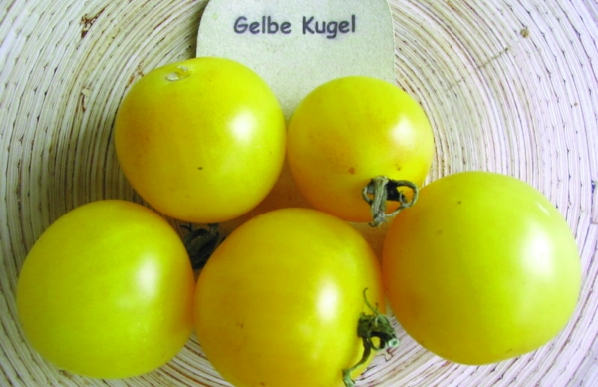 "Paradeis ""Gelbe Kugel""/ Lycopersicon lycopersicum"