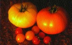 "Paradeis ""Orange""/ Lycopersicon lycopersicum"
