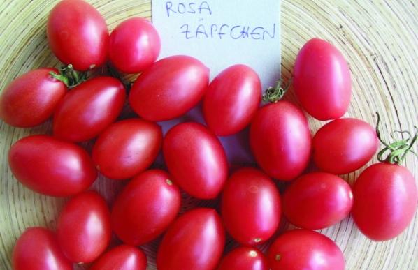 """Paradeis """"Rosa Zäpfchen""""/ Lycopersicon lycopersicum"""