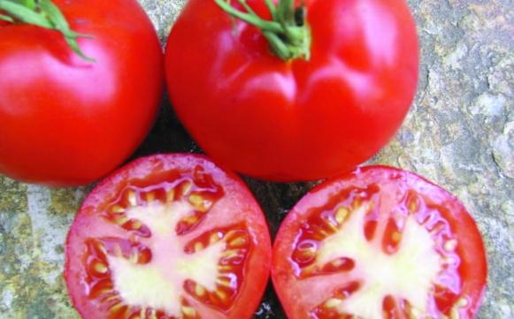 Rote Salat-Paradeis/ Lycopersicon lycopersicum