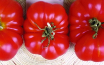 "Paradeis ""Walters Salat""/ Lycopersicon lycopersicum"