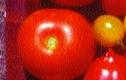 Balkon- / Buschtomate/ Lycopersicon lycopersicum
