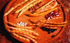 Busch-Trockenbohnen-Mix/ Phaseolus vulgaris nanus
