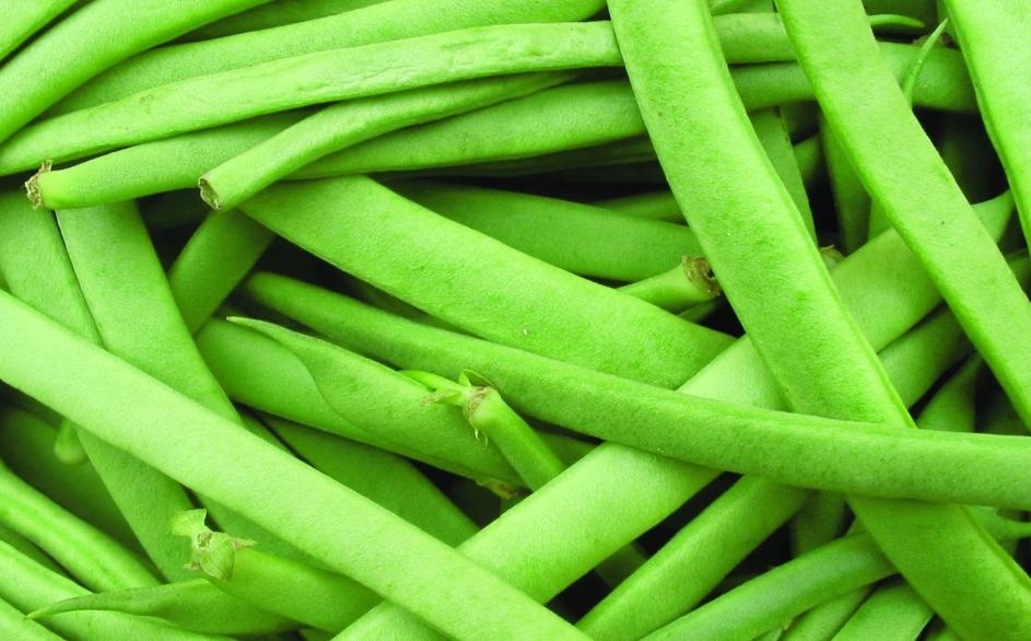 """Trockenbohne """"Maria Leitner""""/ Phaseolus vulgaris"""
