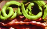"Stangenfisole ""Rassacher Kipfler""/ Phaseolus vulgaris"