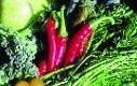 Kleine Rote Pfefferoni/ Capsicum annuum