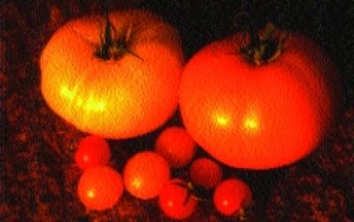 """Paradeis """"Ananas""""/ Lycopersicon lycopersicum"""