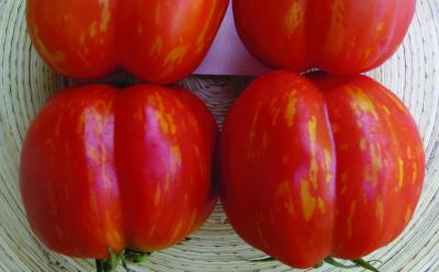 """Paradeis """"Braune Paprika""""/ Lycopersicon lycopersicum"""