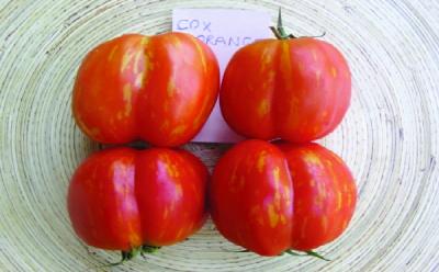 "Paradeis ""Cox Orange""/ Lycopersicon lycopersicum"