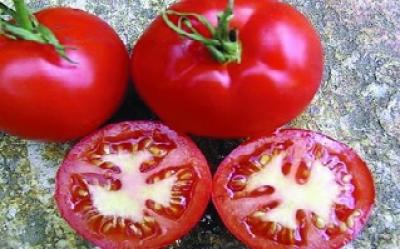 "Salat-Paradeis ""Erikas Lagertomate""/ Lycopersicon lycopersicum"