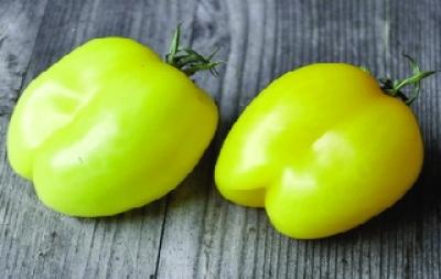"""Paradeis """"Gelbe Paprika""""/ Lycopersicon lycopersicum"""