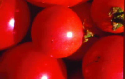 "Paradeis ""Kleine Rosa""/ Lycopersicon lycopersicum"