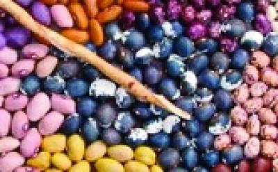 """Stangentrockenbohne """"Blau-Weiße von Bernarda""""/ Phaseolus vulgaris"""