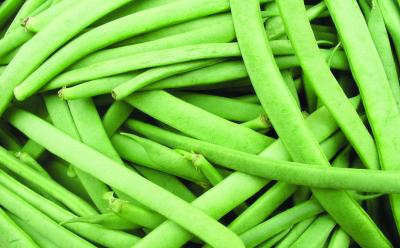 "Buschfisole ""Szabo""/ Phaseolus vulgaris var. nanus"