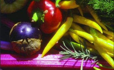 Tomatillo/ Physallis ixocarpa