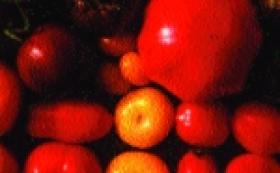 "Paradeis ""Glühbirnchen""/ Lycopersicon lycopersicum"
