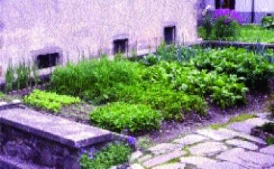 Gartenkresse/ Lepidium sativum