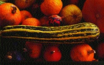 Gestreifte Zucchini/ Cucurbita pepo